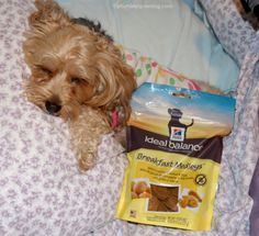 Start Your Day with a Smile with Hill's Breakfast Medleys - YourDesignerDog