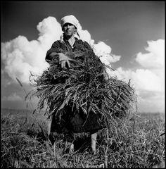Robert Capa © International Center of Photography USSR. 1947. Woman reaping wheat on Shevchenko collective farm.