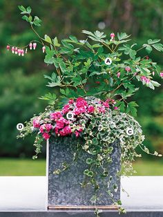 Great Container Gardens    This would be a perfect compliment to my bleeding hearts in my front and side yards.