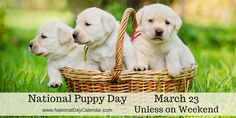 NATIONAL PUPPY DAY – March 23 (unless weekend) | National Day Calendar