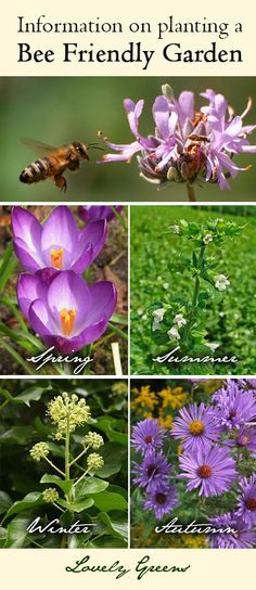 Information on planting a Honey Bee Friendly Garden