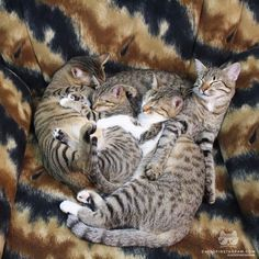 """From @HappyCatFamily """"Tabby collection kitty pile """" #catsofinstagram by cats_of_instagram"""