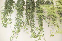 Mi cesta de mimbre   Sitios we love: Moss Floristas.   http://www.micestademimbre.com