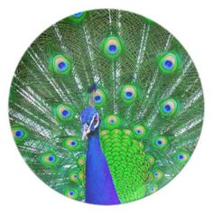 Peacock with fanned tail plate