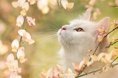 Explore the Cats collection - the favourite images chosen by AtelierKatyHaecker on DeviantArt. Warrior Cats, Pretty Cats, Beautiful Cats, I Love Cats, Cool Cats, Baby Animals, Cute Animals, Photo Chat, Cat Aesthetic
