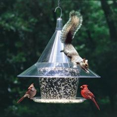 Five Inexpensive Ways To Squirrel Proof Your Bird Feeder                                                                                                                                                                                 More