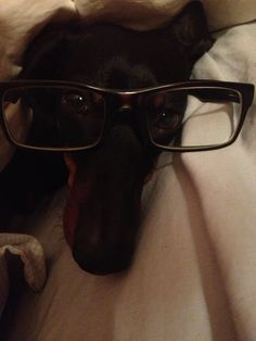 My very smart doggy!