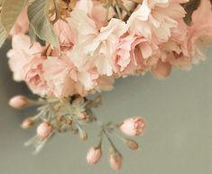 Color Palette #Blush #Sage
