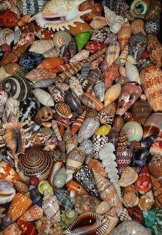 Sea shells by the dozens