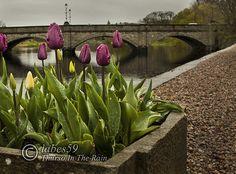 Thurso Bridge Spring Morning  by Labes59, via Flickr
