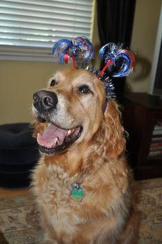 Patriotic golden retriever  : )  Happy 4th of July !