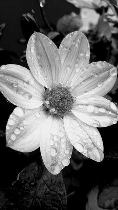 Rain Rain Go Away: The Wednesday Blog Hop...