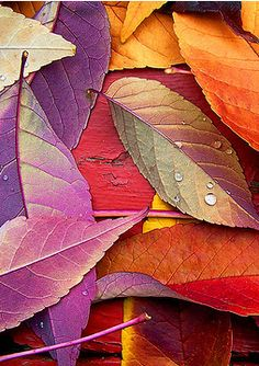 Purple and orange - vibrant colours within nature. Images Victoriennes, Caran D'ache, Jolie Photo, Orange And Purple, Pink, Color Combos, Color Mix, Autumn Leaves, Mother Nature
