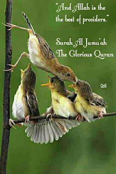 DesertRose///Allah is the best provider,;,