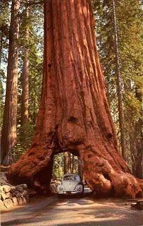 Yosemite National Park (Best Honeymoon Destinations In USA) | BestHoneymoonDestinationss.blogspot.com