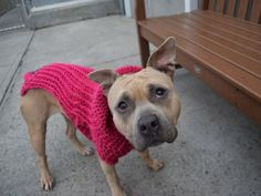SAFE❤️❤️ 12/1/16 BY SECOND CHANCE RESCUE❤️❤️ THANK YOU SO VERY MUCH❤️❤️ I´M BEGGING!!! 12/1/16 THIS PRECIOUS DOLL HAS BEEN LISTED SEVERAL TIMES!! THIS MIGHT BE HER LAST AND SHE´S LISTED TO BE MURDERED BY NOON TODAY!! WILL YOU DO SOMETHING TO PREVENT THAT? Brooklyn Center My name is BARBIE. My Animal ID # is A1097507. I am a female tan and white am pit bull ter mix. The shelter thinks I am about 2 YEARS I came in the shelter as a STRAY on 11/21/2016 from NY 11420, owner surrender reason…