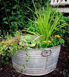 Exciting DIY Design Using Buckets For Gardening Ideas With Old Bucket As Planter For Some Plants Placed On Ground Near Other Plants At Frontyard