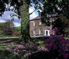 Ballymaloe House...and home of the famous cooking school..I had strawberries and scones here at 4pm with hot Irish tea.
