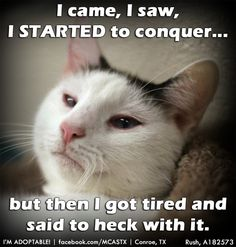 Sounds like EVERY weekend at my house! ;) ADOPTED!!!