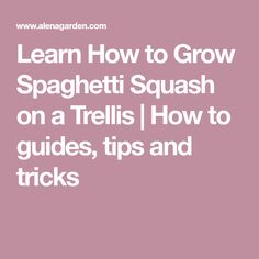 Learn How to Grow Spaghetti Squash on a Trellis | How to guides, tips and tricks Growing Spaghetti Squash, Growing Squash, Winter Squash Varieties, Garden Spade, Metal Trellis, Squashes, Learning, Tips, Pumpkins
