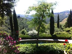Garden in Tuscany: Cypress, Oleander white & pink, Mimosa tree and red geraniums Pebble Garden, Red Geraniums, Tuscany, Country Roads, Italy, Plants, Trees, Pink, Italia