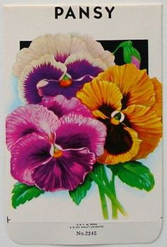 Recent Stock Seed Packet, Pansy, #2245