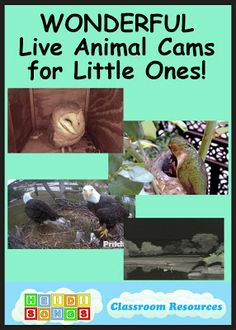 This is a collection of links to some WONDERFUL live animal cams that can be used in early childhood classrooms!