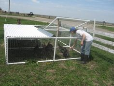 Re purposed trampoline to a chicken tractor hmmmm for Big chicken tractor