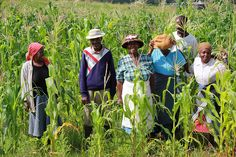 Family farming includes all family-based agricultural activities, and it is linked to several areas of the rural development.  Here is a group of farmers benefitting from FAO Emergency and Recovery Programme 2012-2013 in conservation agriculture field.