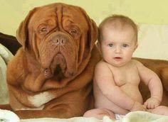 sooo darn adorable! Looks like Hooch from Turner and Hooch