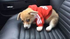 Nope - Cute Corgi Puppy Rule The World - Nice cat Funny Animal Memes, Cute Funny Animals, Cute Baby Animals, Funny Cute, Funny Dogs, Animals And Pets, Cute Corgi Puppy, Cute Puppies, Cute Dogs