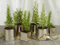 Rosemary Christmas Tree - Make an inexpensive, fragrant and long-lasting centerpiece with rosemary plants that resemble mini Christmas trees. Repot young plants from your local nursery in elegant containers. Holiday Centerpieces, Christmas Table Decorations, Holiday Tables, Centerpiece Ideas, Holiday Decor, Holiday Parties, Christmas Tables, Centrepieces, Thanksgiving Table