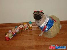 Snow Pug-White and her seven dwarfs- overindulgent? yes, but this is kinda cute.
