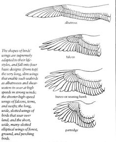 Good drawings on wings and feathers