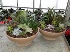 $49.95 Succulent planter