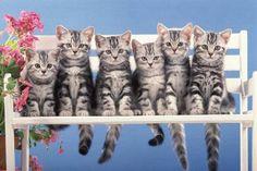 Katzenfamily, jetzt bestellen auf kunst-fuer-alle.de