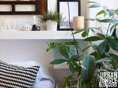 Appunti di casa: Green Life