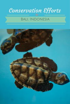 The amazing marine conservation efforts off the coast of Bali in Pemuteran