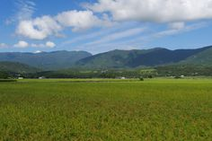 Reisfeld East Rift Valley Rift Valley, Taiwan, Mountains, Nature, Travel, World, Traveling, Viajes, Nature Illustration