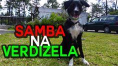 """Na Verdizela e ao som de Samba e Bossa Nova nasceu uma estrela. Dizem que poderá ser a nova """"Lassie"""". O herói canino Napoleão e a sua família recarregam energias em fim de semana prolongado. Todas as imagens foram captadas com um Samsung Galaxy S5."""