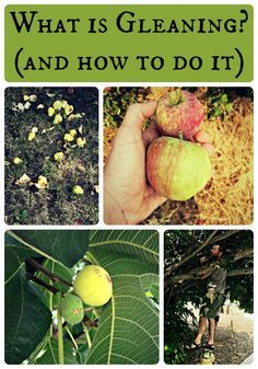 What is Gleaning and How to do it