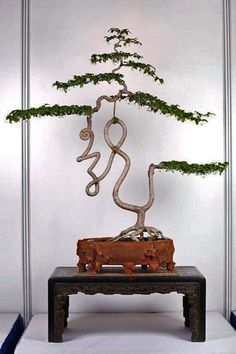 The ancient Japanese art of Bonsai creates a miniature version of a fully grown tree through careful potting, pruning and training. Even if you& not zen enough to labour over your own Bonsai,. Ikebana, Plantas Bonsai, Ancient Japanese Art, Indoor Bonsai, Miniature Trees, Bonsai Garden, Arte Floral, Growing Tree, Trees To Plant