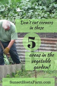 Landscaping Software - Offering Early View of Completed Project You Can Be Successful Growing Vegetables With Some Planning, And Not Cutting Corners In Important Areas. Here's Five Areas Not To Cut Corners With When Growing Your Vegetable Gardening,. Backyard Vegetable Gardens, Veg Garden, Garden Pests, Edible Garden, Easy Garden, Garden Tools, Garden Ideas, Garden Inspiration, Garden Forum