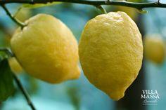 Sorrento Oval Lemons