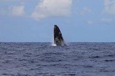 Les dauphins et les baleines au large de Mayotte