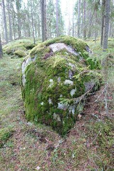 Metsä on paras tapa torjua kaamosmasennusta! | Kodin Kuvalehti #forest #woods #stone #finland