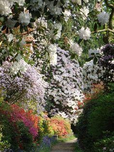 Awash with blossom. #garden