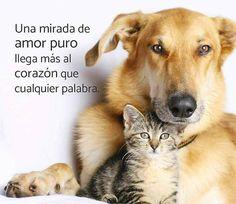 Una mirada de amor puro llega más al corazón que cualquier palabra.