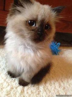Awwww kitty!!!!