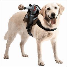 犬好きは必見!犬専用の騎乗型コスプレシリーズがすごい | BUZZAP!(バザップ!)